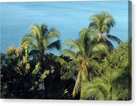 Trees At The Beach Canvas Print