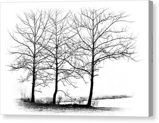 Barren Canvas Print - Trees At Water's Edge by Tom Mc Nemar