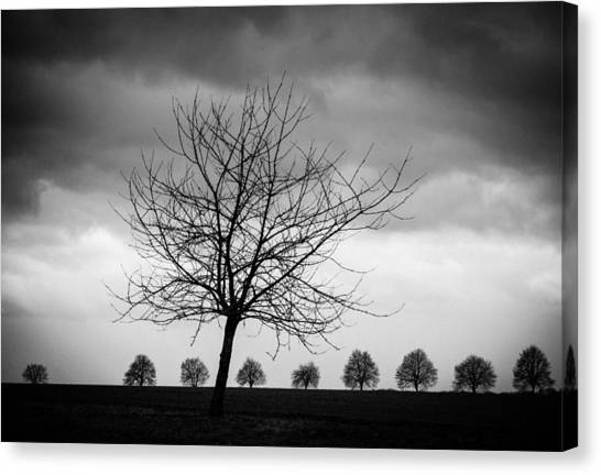 Baden Wuerttemberg Canvas Print - Trees Black And White by Matthias Hauser