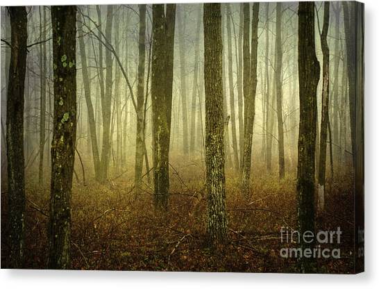 Trees II Canvas Print