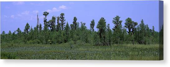 Okefenokee Canvas Print - Trees In A Field, Suwannee Canal by Panoramic Images
