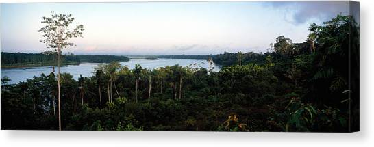 Amazon Rainforest Canvas Print - Trees In A Forest, Amazon Rainforest by Panoramic Images