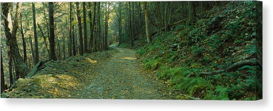 Shenandoah National Park Canvas Print - Trees In A National Park, Shenandoah by Panoramic Images