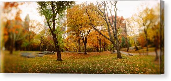 Fallen Leaf Canvas Print - Trees In A Park, Central Park by Panoramic Images