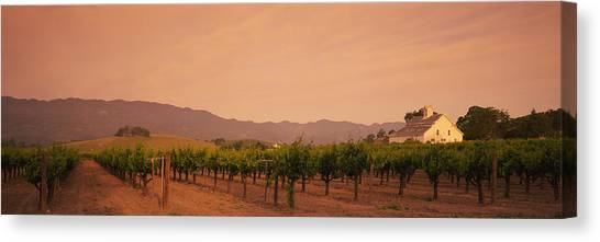 Vineyard In Napa Canvas Print - Trees In A Vineyards, Napa Valley by Panoramic Images