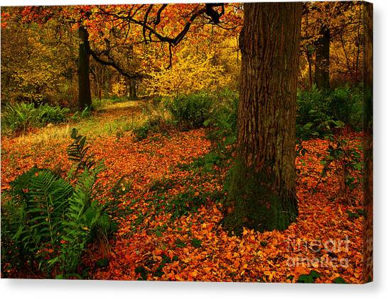 Trees In Autumn Woodland Canvas Print