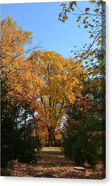 Trees In Fall Canvas Print
