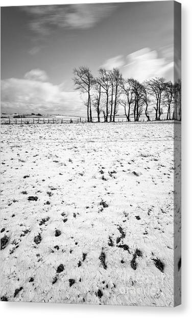 Trees In Snow Canvas Print - Trees In Snow Scotland IIi by John Farnan