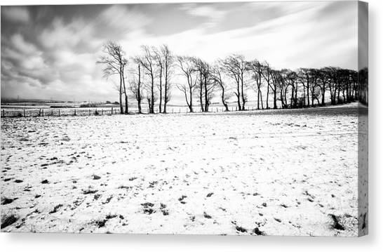 Trees In Snow Canvas Print - Trees In Snow Scotland Iv by John Farnan