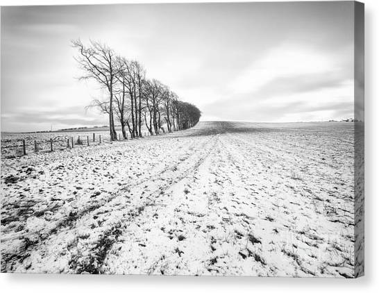Trees In Snow Canvas Print - Trees In Snow Scotland V by John Farnan