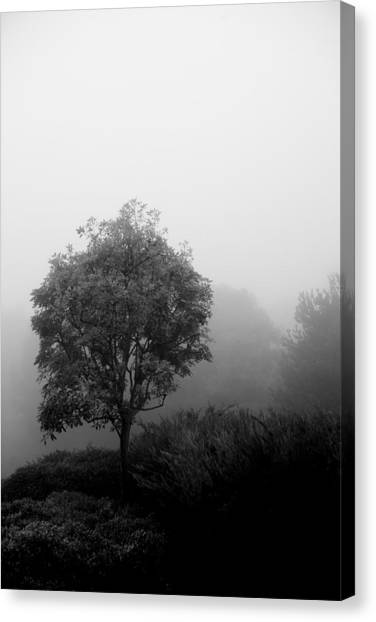Trees In The Midst 2 Canvas Print