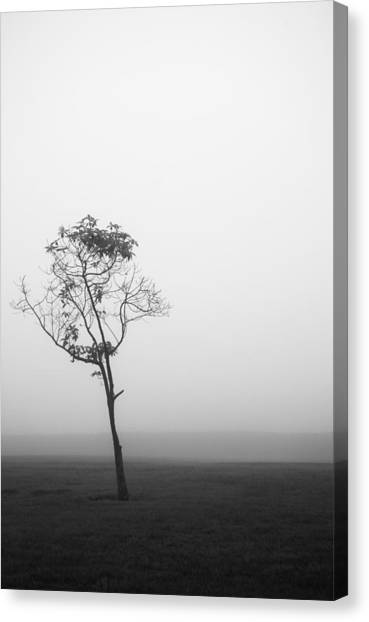 Trees In The Midst 4 Canvas Print