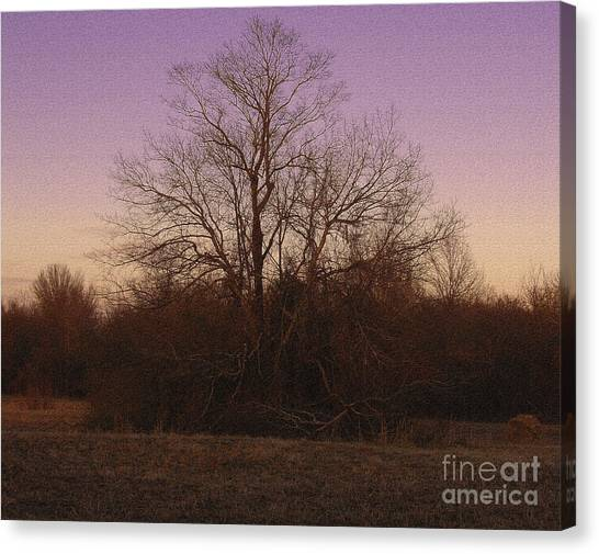 Trees In The Setting Sun Canvas Print by R McLellan