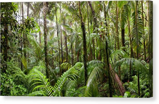 Tropical Rainforests Canvas Print - Trees In Tropical Rainforest, Eungella by Panoramic Images