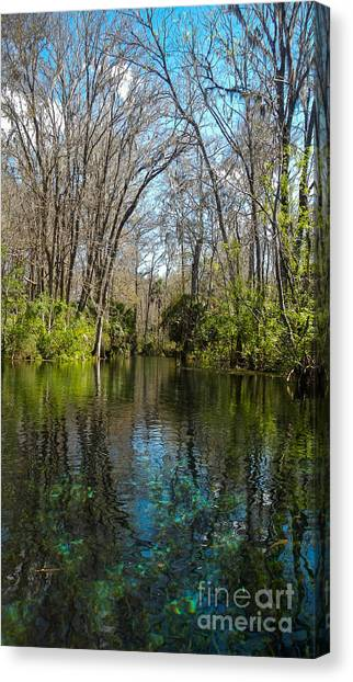 Trees In Water Canvas Print