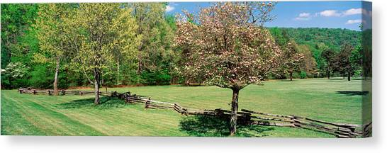 Pisgah National Forest Canvas Print - Trees On A Field, Davidson River by Panoramic Images