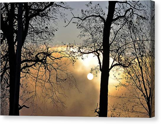 Trees On Misty Morning Canvas Print