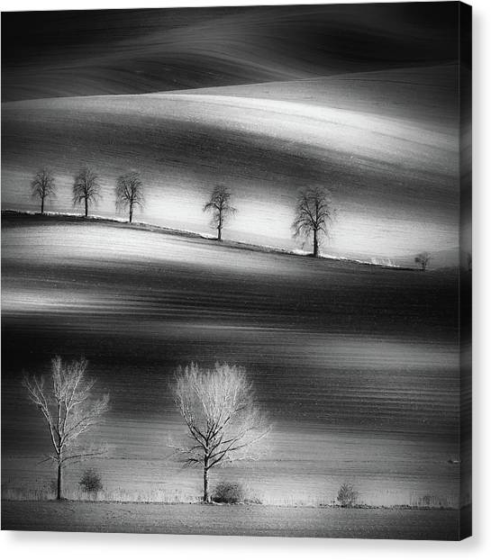 Rolling Hills Canvas Print - Trees by Piotr Krol (bax)