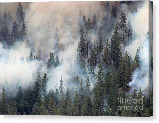 Beaver Fire Trees Swimming In Smoke Canvas Print