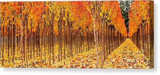 Treescape 2 Canvas Print