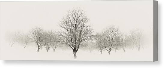 Treeternity Canvas Print by Jim Speth