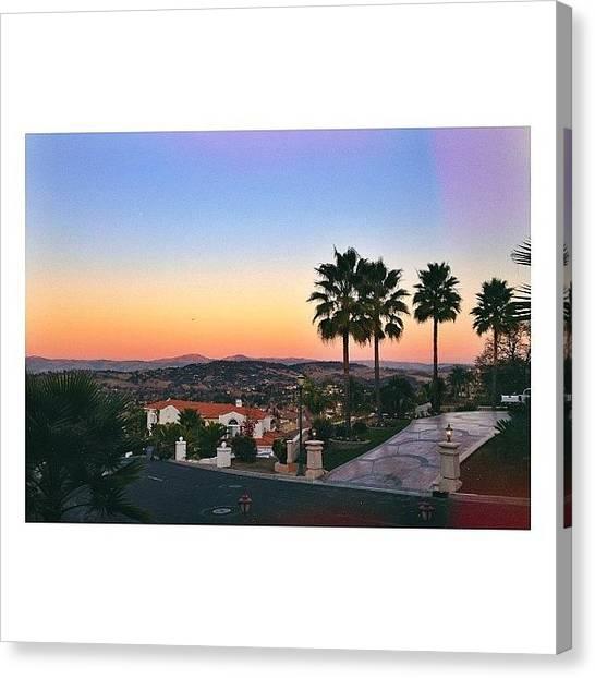 Palm Trees Canvas Print - California Palms by Ariana Moshref