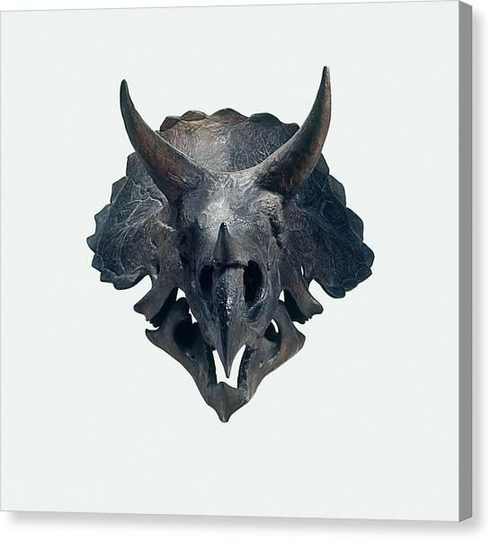 Triceratops Canvas Print - Triceratops Skull by Dorling Kindersley/uig