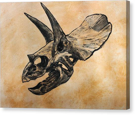 Triceratops Canvas Print - Triceratops Skull by Harm  Plat