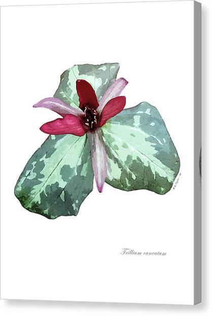 Trillium 2 Canvas Print