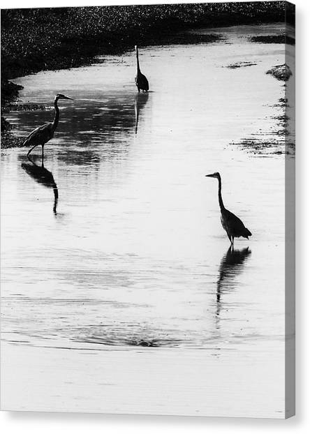 Canvas Print featuring the photograph Trilogy - Black And White by Belinda Greb