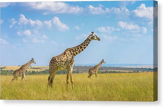Camouflage Canvas Print - Trio Giraffes by Husain Alfraid
