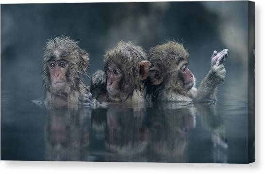 Monkeys Canvas Print - Trio by Takeshi Marumoto