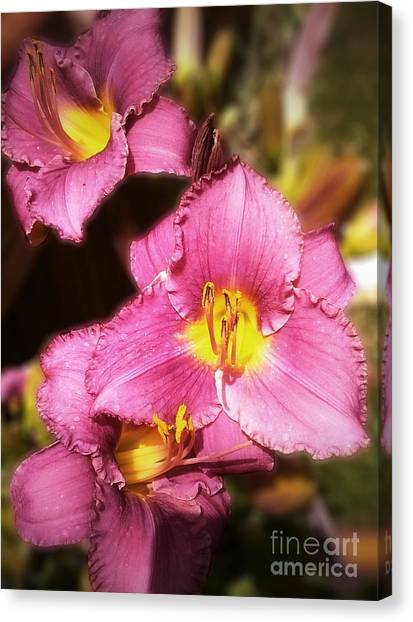 Triple Lilies Canvas Print