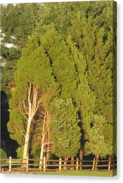 Triple Trees Canvas Print by Debbie Nester