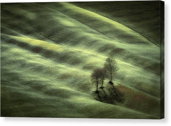 Rolling Hills Canvas Print - Triplet by Marek Boguszak
