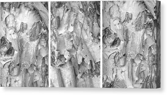 Triptych Of Curling Tree Bark In Black And White With A White Background Canvas Print