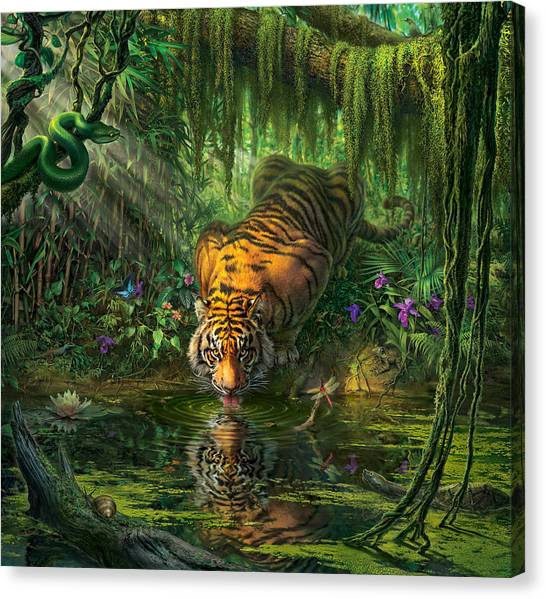Bengals Canvas Print -  Aurora's Garden by Mark Fredrickson