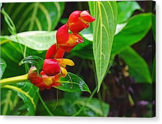 Tropic Beauty Canvas Print by Denise Darby