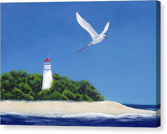 Tropic Bird Canvas Print