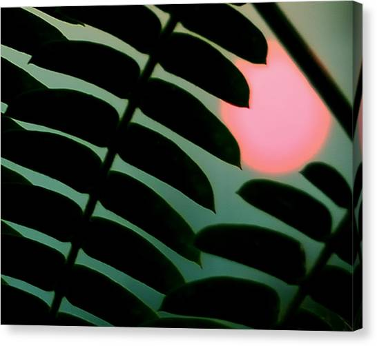 Mimosa Canvas Print - Tropic Of Capricorn by Steven Milner