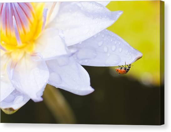 Canvas Print featuring the photograph Tropical Adventure by Priya Ghose