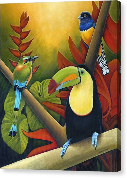 Toucans Canvas Print - Tropical Birds by Nathan Miller