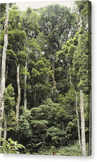 Monteverde Canvas Print - Tropical Cloud Forest Layers by Gregory G. Dimijian, M.D.