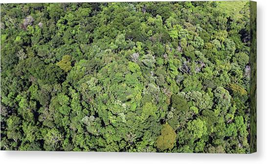 Iguazu Falls Canvas Print - Tropical Forest Near Iguazu Falls by Alfred Pasieka
