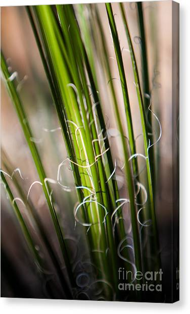 Tropical Grass Canvas Print