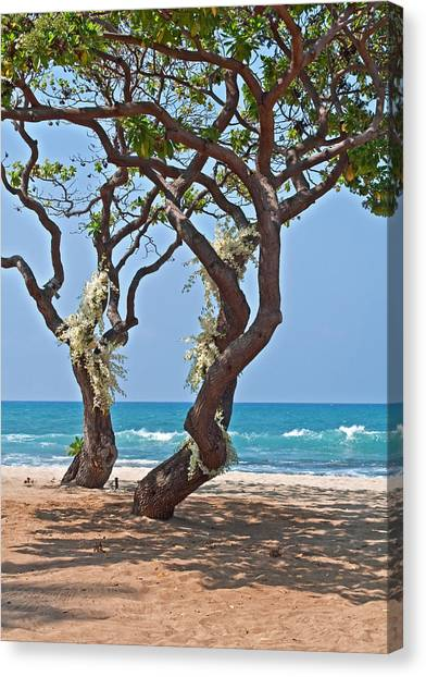Tropical Heliotrope Trees With White Orchids On Beach Canvas Print