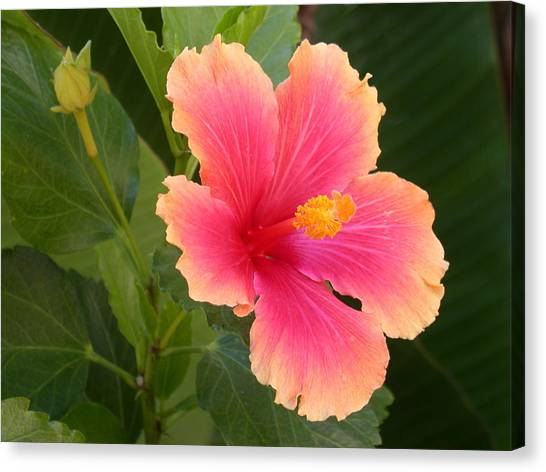 Tropical Hibiscus Canvas Print
