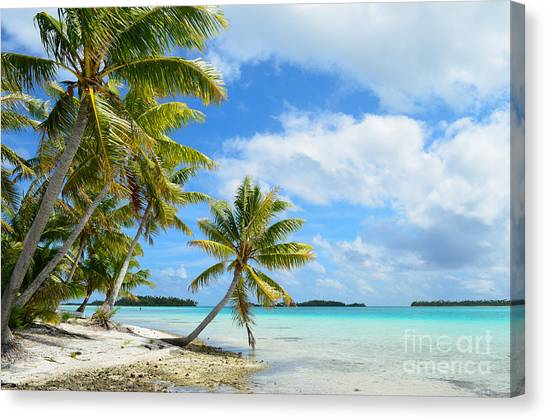 Tropical Beach With Hanging Palm Trees In The Pacific Canvas Print
