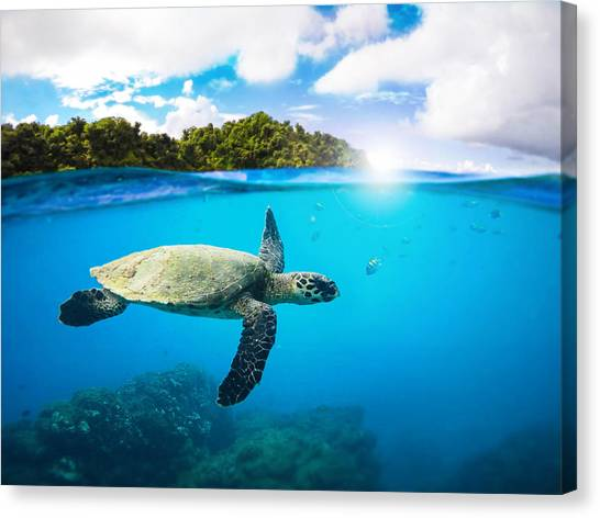 Turtles Canvas Print - Tropical Paradise by Nicklas Gustafsson