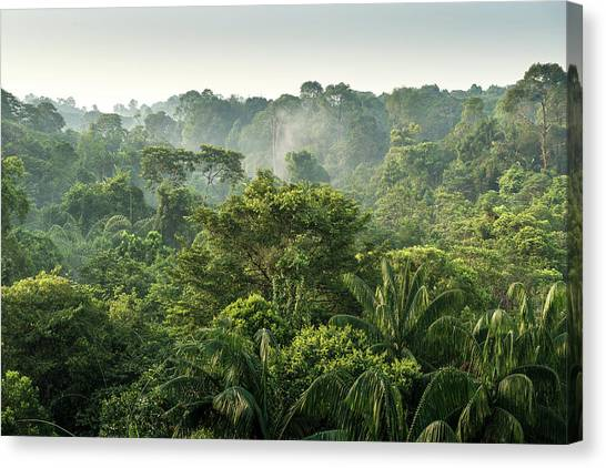 Tropical Rainforest Canvas Print by Chanachai Panichpattanakij